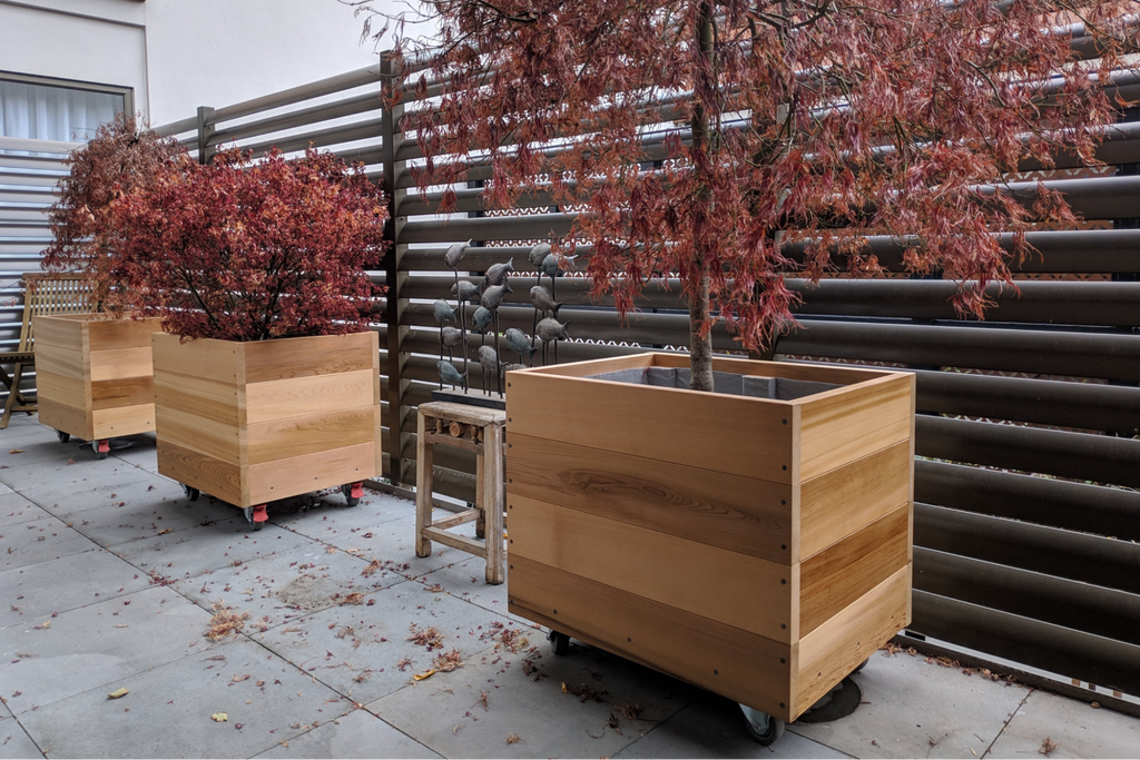 Bloom Box Products timber planter boxes in concrete courtyard