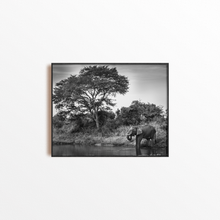 Load image into Gallery viewer, Watering Hole