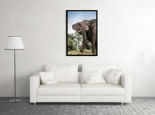 Load image into Gallery viewer, Phinda Elephant