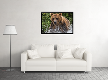 Load image into Gallery viewer, The Big Bear