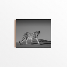 Load image into Gallery viewer, Cheetah