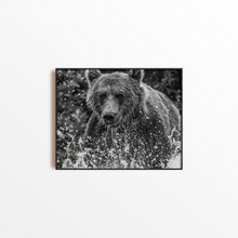 Load image into Gallery viewer, The Bear