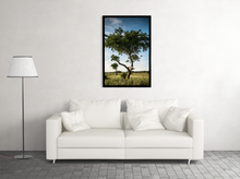 "Load image into Gallery viewer, ""Tree Climber"""