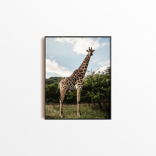 Load image into Gallery viewer, Giraffe