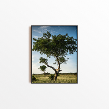 Load image into Gallery viewer, Leopard Tree Colour