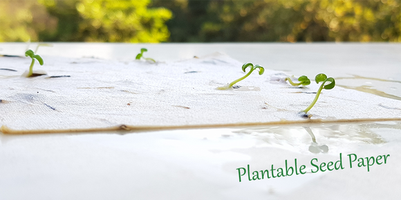 Plantable seed paper made skillfully with cotton with live seeds embedded. Seed embedded plantable seed paper in India