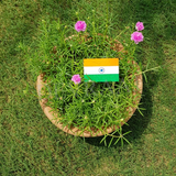 Devraaj Eco-friendly Plantable Indian Flags for 15th August 26th January national festivals gifts & Eco-friendly nationalism