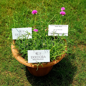 Devraaj Eco-friendly plantable seed paper business cards with flower lying on grass