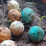 Plantable Seed Balls in pack of