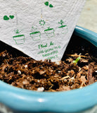 Plantable seed paper with germination of seedlings