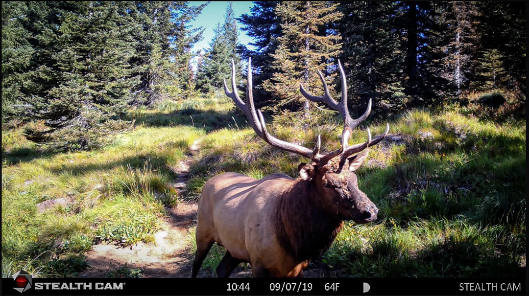 Idaho Elk Caught On Trail Camera!!!!