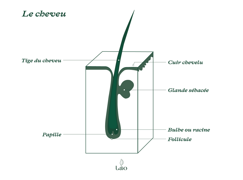 La structure du cheveu | LAO blog cheveux au naturel