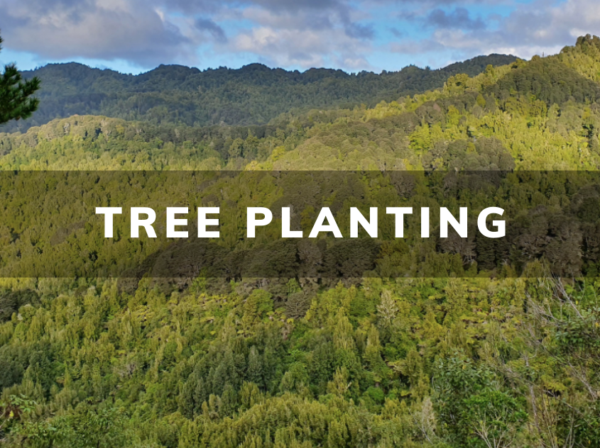 tree-planting-forest-plant-trees-springowls-spring