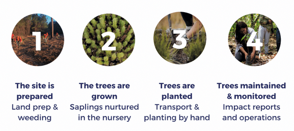 one-tree-planted-planting-trees-sustainable-eco-friendly