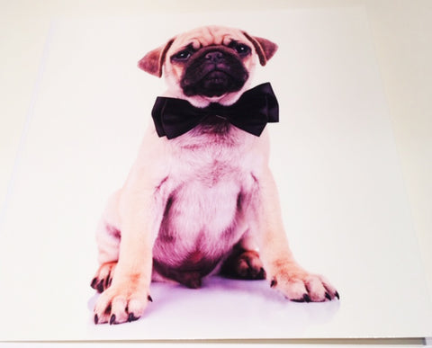 Pug Birthday Card - Blank Inside - HerbysGifts.com
