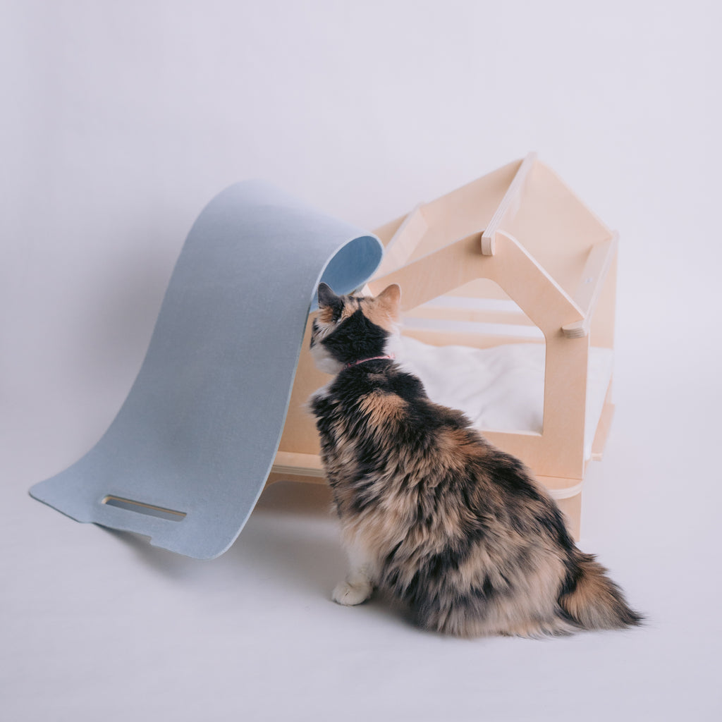 Rawrycabin Delicate Blue Assembly Process with Cat