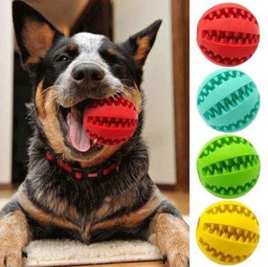 Dog Teeth Cleaning and Have-fun Ball