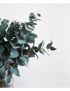 The Eucalyptus One