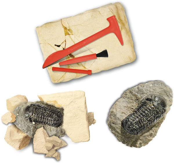 Wonders of Nature - Fossil Trilobite Discovery Kit