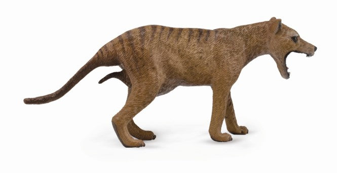 Thylacine (Tasmanian Tiger)-Female