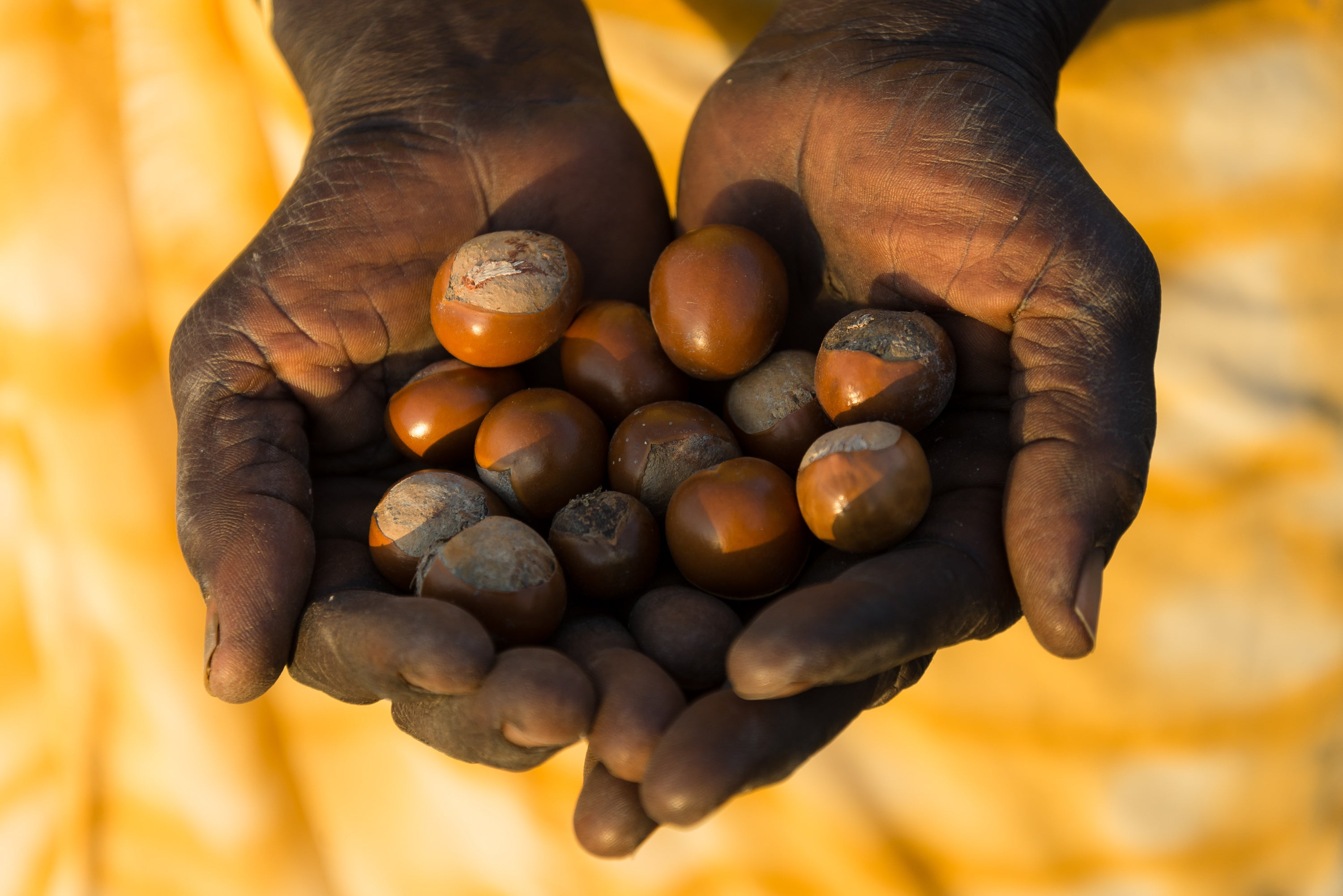 Artisan Hands with Shea