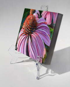Courting Cone Flower painting on clear acrylic easel
