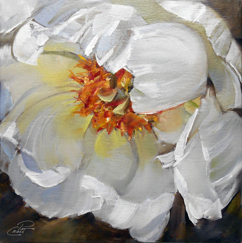 Spring Peony 6x6 oil painting by Pat Cross