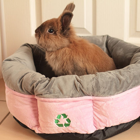 A small brown lion head bunny looks out of his recycled pink and grey pet bed.