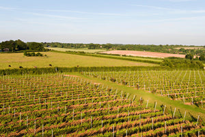 Hattingley Valley Award Winning English Sparkling Wine Winery Tour And Tasting With Vineyard Tour