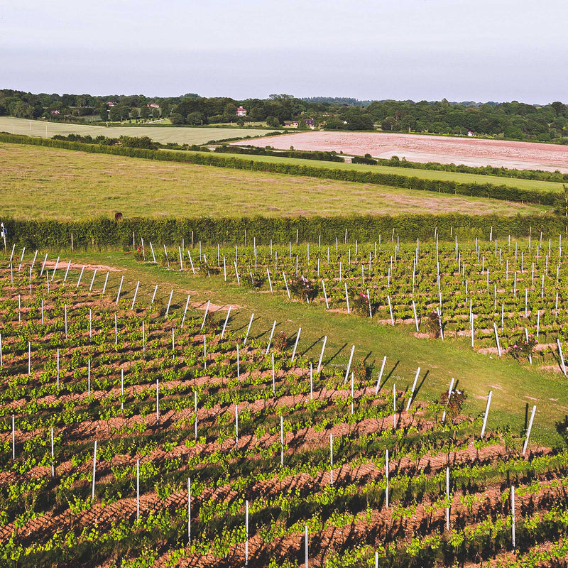 Hattingley Valley English Sparkling Wine Vineyard Hampshire