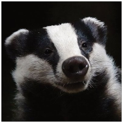Badger card 1