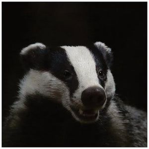 Badger card 2