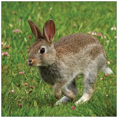 Baby Rabbit Card 4