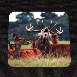 Red deer coaster 2