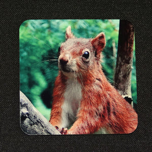 Red squirrel coaster 2