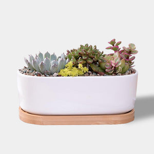 Contemporary white ceramic and wood succulent planter