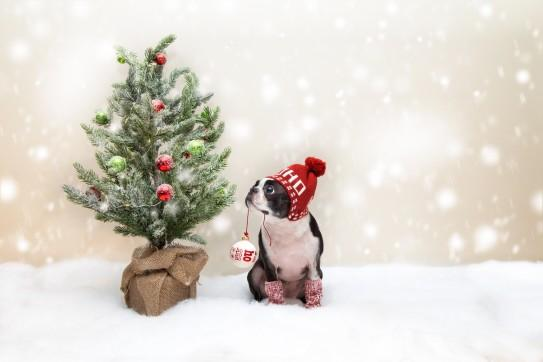 Don't Forget the Dog: 5 Ways to Include Your Puppy in the Holidays | LuxeMutt