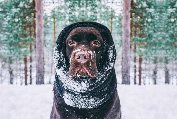 How to Keep Your Dog Active in the Cold | LuxeMutt