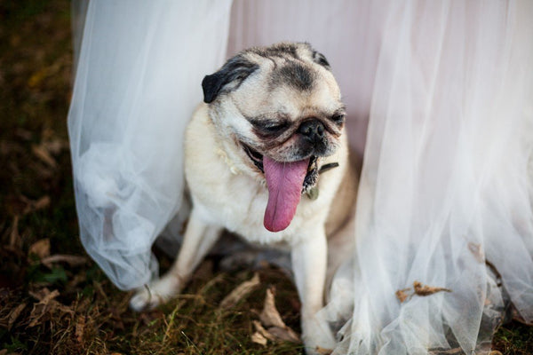 Incorporating Your Dog into Your Big Day | LuxeMutt