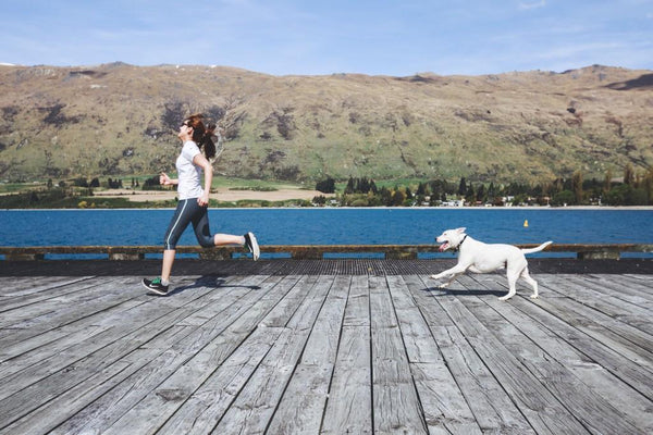 Our 7 Favorite Dog-Friendly Activities | LuxeMutt