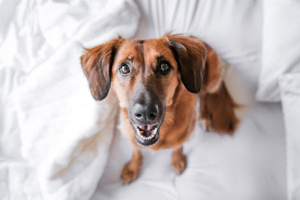 Say Cheese! How to Take the Perfect Picture of Your Dog | LuxeMutt