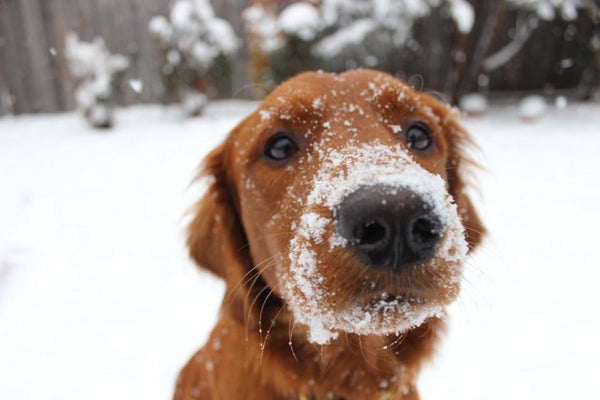 Warm Up Winter:  Six Ways to Keep Your Pup Active On and Off Their Leash | LuxeMutt