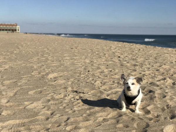 What Are the Leash Laws in New Jersey? | LuxeMutt