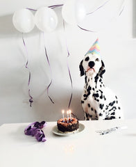 Dalmatian with birthday cake balloons and party hat