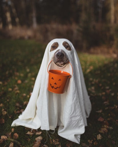 dog as ghost with treat bucket