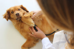 vet with a stethoscope and dog