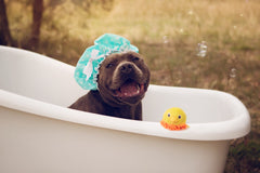 dog in bathtub with bubbles and showercap