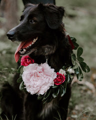 dog in wedding party wearing flowers