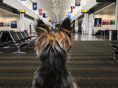 dog sitting at gate in airport