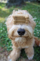 dog with treats stacked on nose